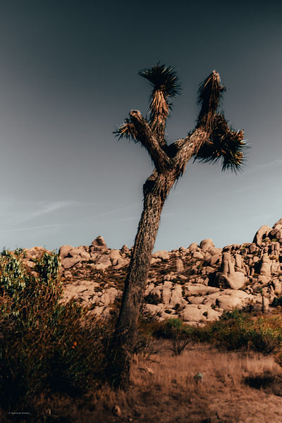- photographer - video creator - filmmaker - landscape photography - product promotion