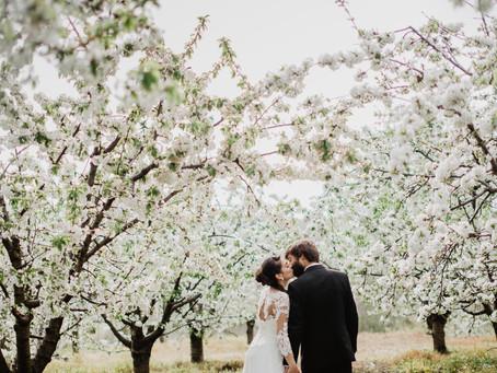 Casamento entre cerejeiras
