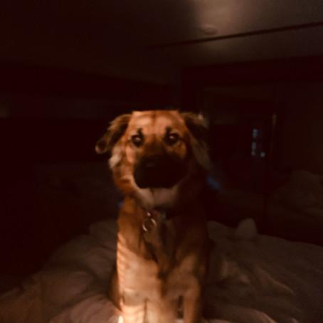 Madison's Blog!