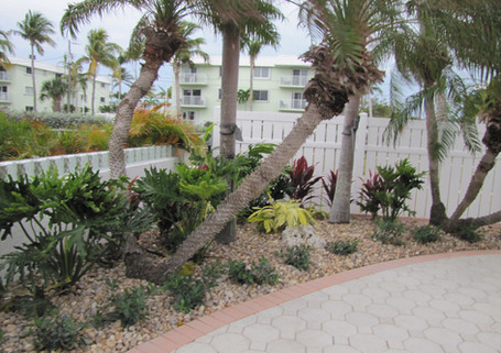 Tropical Landscape After