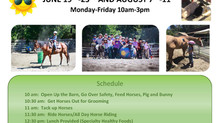 Sign Up for Summer Horse Camp Now!