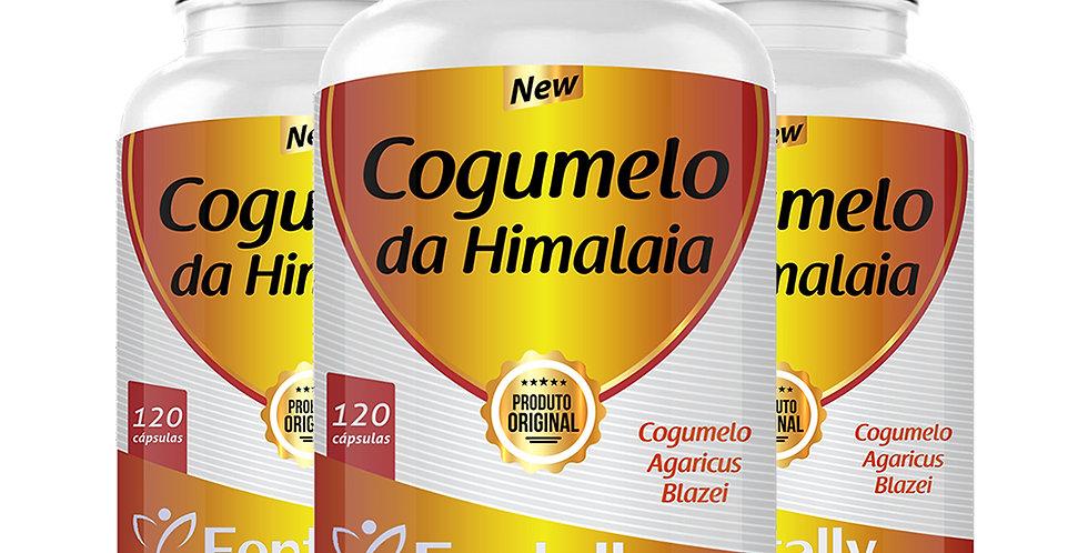 Combo - Cogumelo do Himalaia – Cogumelo Agaricus Blazei – 120 cápsulas