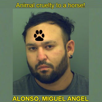 ALONSO, MIGUEL ANGEL - Texas, USA