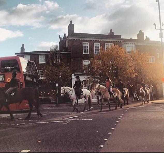 Horses in the village.JPG