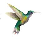 kolibřík.png