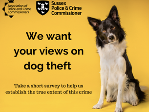 Dog Thefts - Your Views National Survey