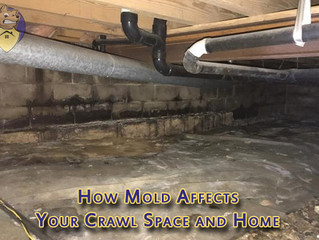 How Mold Affects Your Crawl Space and Home