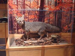 DSCF0136 Very Good fox
