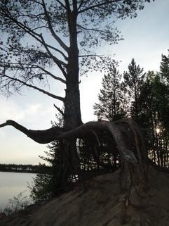 FINLAND-2010.jpg