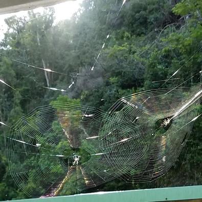 D. Aranhas estão de parabéns... 😍 #spid