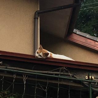 お屋根から失礼します