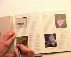 ''Butterfly''-2004