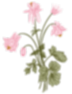 Flower Elements-09.png