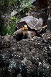 Akhilleus ve Kaplumbağa