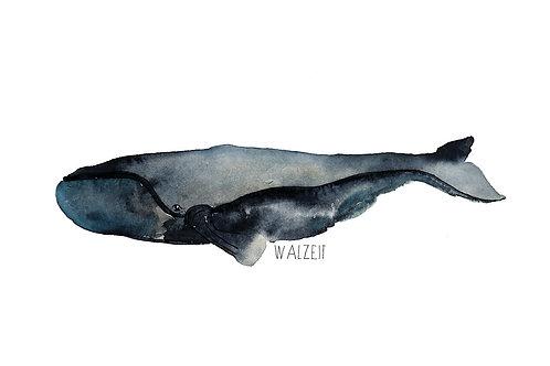Walzeit