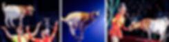 Козлик-канатоходец.jpg