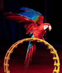 Аргентинские попугаи