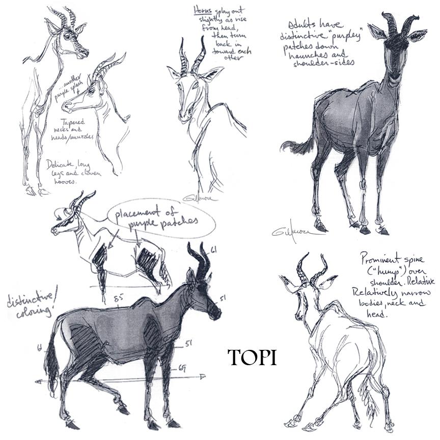 TOPI antelope.jpg