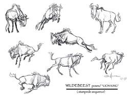 WILDEBEEST Poses