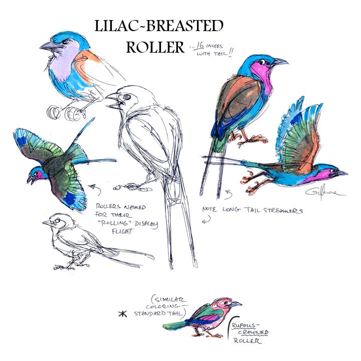 ROLLER bird.jpg
