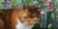 RoseNoelia1.jpg
