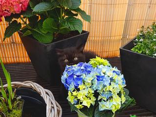 Fonsi und die Blumen