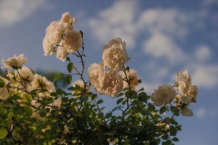 Rose Gardens-5825.jpg