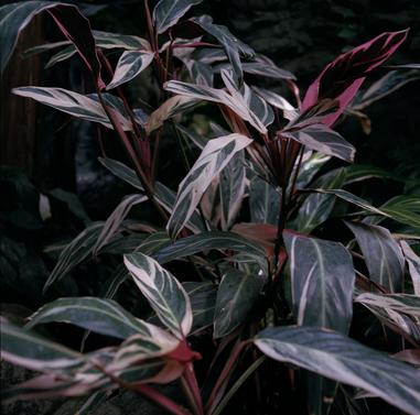 Photo011_plantsred.png