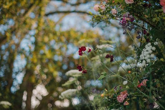 Rose Gardens-5809.jpg