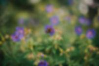 Rose Gardens-5800.jpg