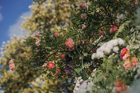 Rose Gardens-5819.jpg