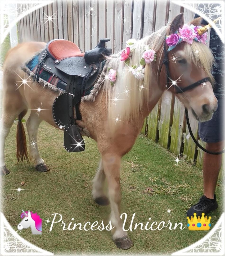 Princess Unicorn Pony