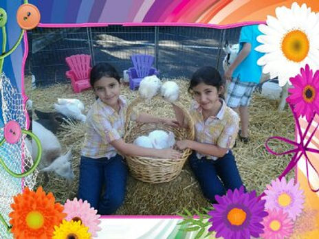 petting bunnies