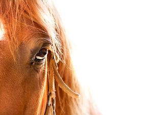 Horse eye close up in high key.jpg