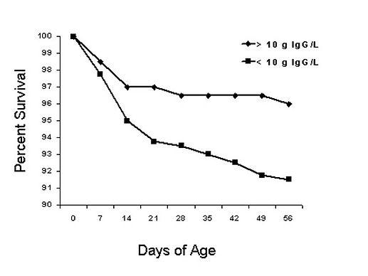 colostrum survival rate