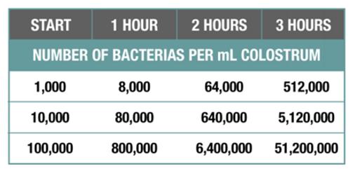 Number of bacterias per ml colostrum
