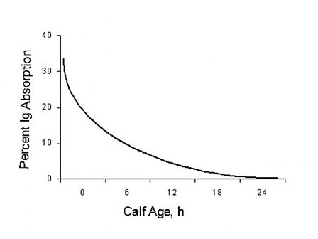 colostrum absorption