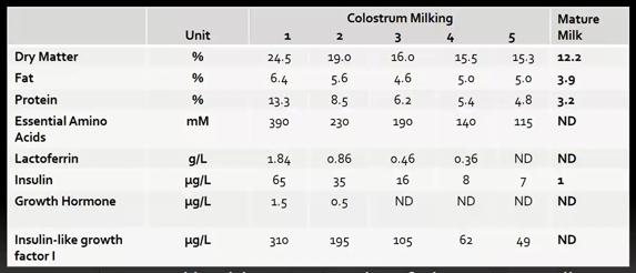 colostrum milking