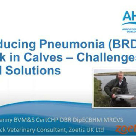 Colin Penny of Zoetis explains some of the disease challenges of group reared heifers.