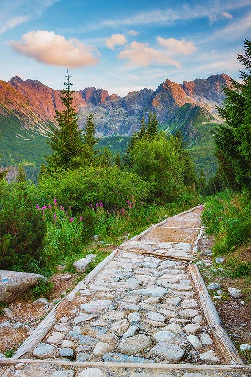 Szlak do Gąsienicowej