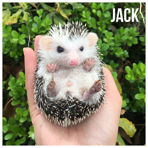 Jack- $325