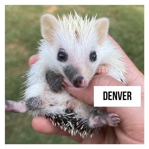 Denver- $350