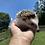 Thumbnail: Teddy- Adult