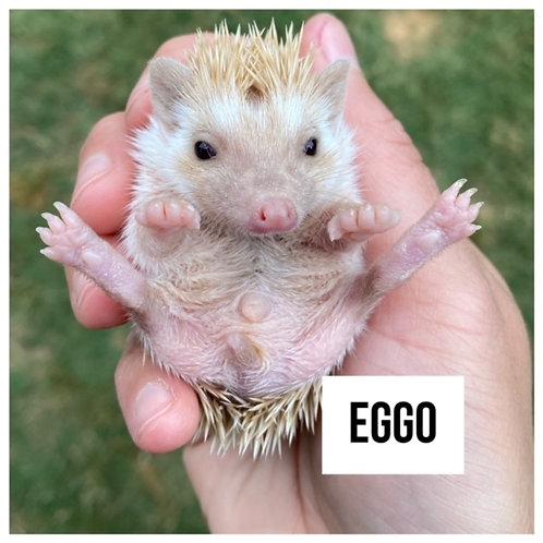 Eggo- $325
