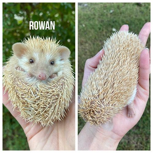 Rowan $275