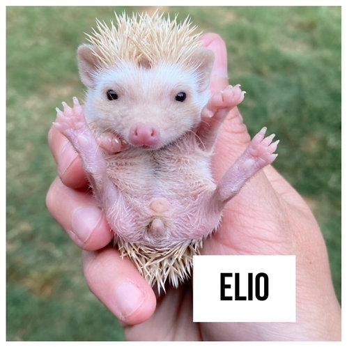 Elio- $300