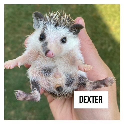 Dexter- $350