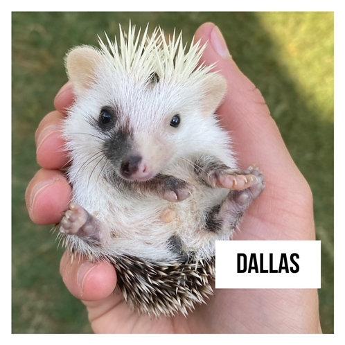Dallas- $350
