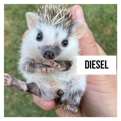 Diesel- $350