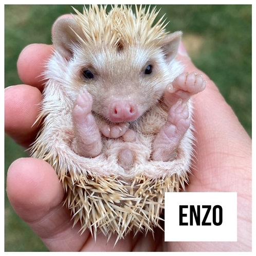 Enzo- $325